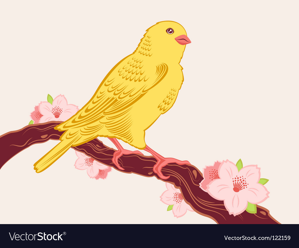 Canary bird vector   Price: 1 Credit (USD $1)