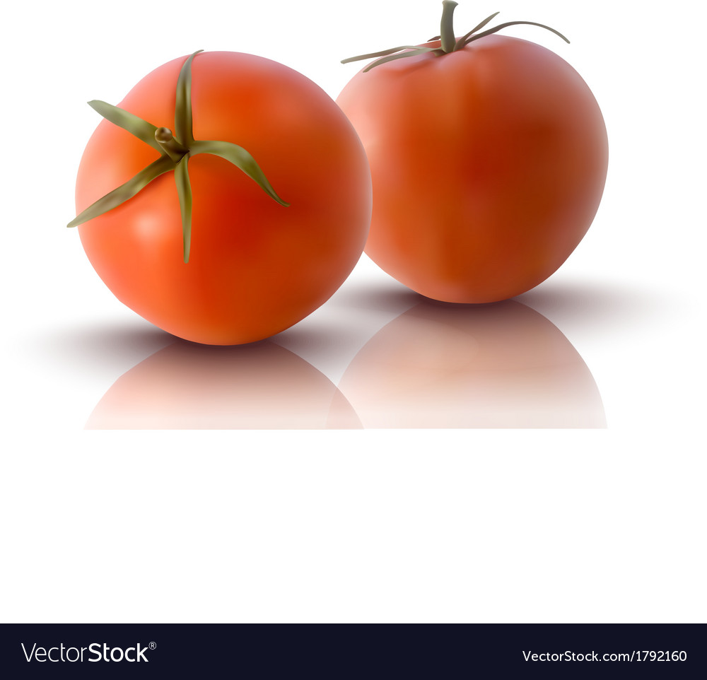 Red tomatoes vector | Price: 1 Credit (USD $1)