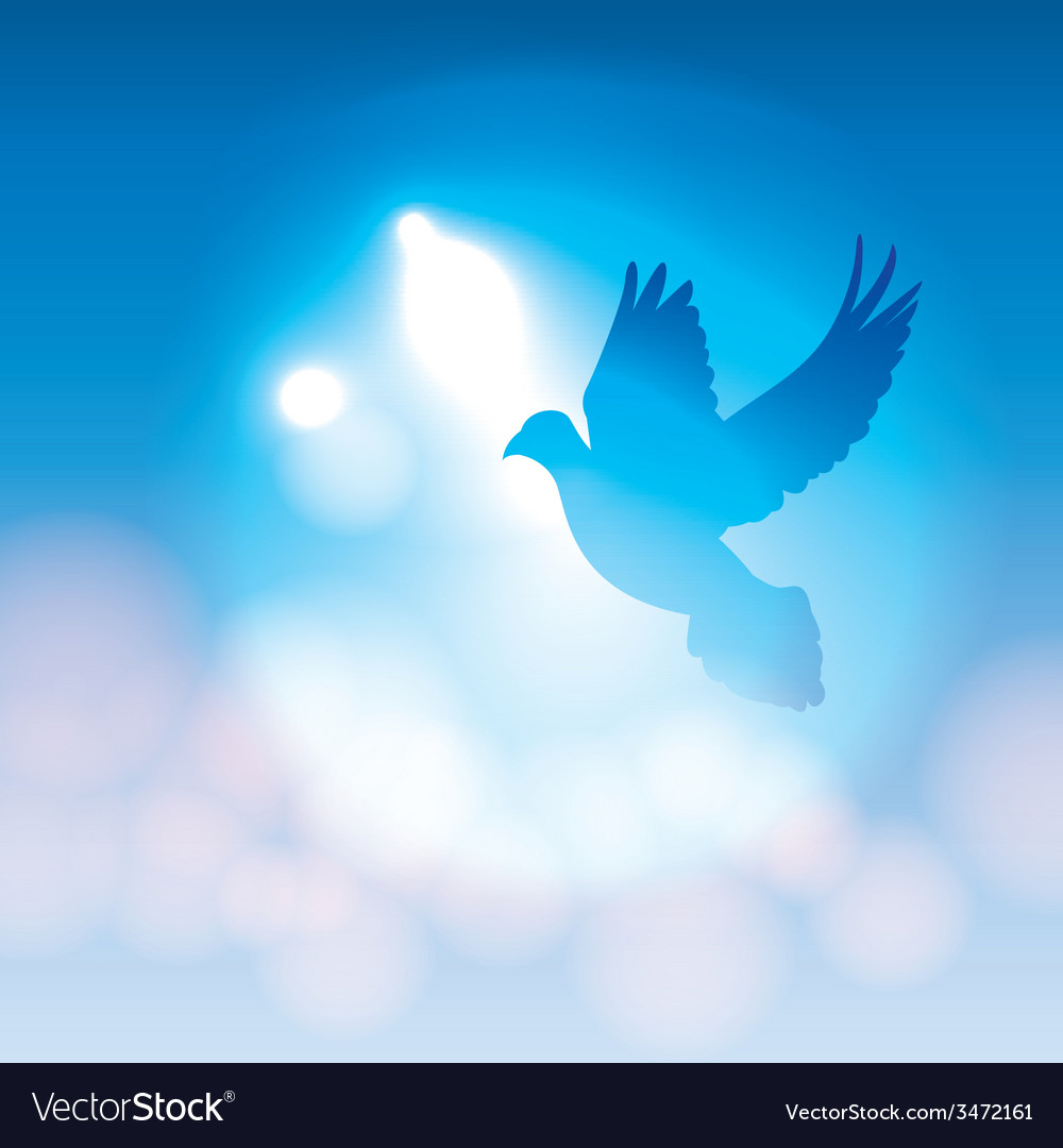 Dove silhouette and soft bokeh lights vector | Price: 1 Credit (USD $1)