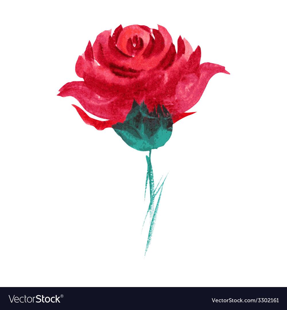 Watercolor rose vector | Price: 1 Credit (USD $1)