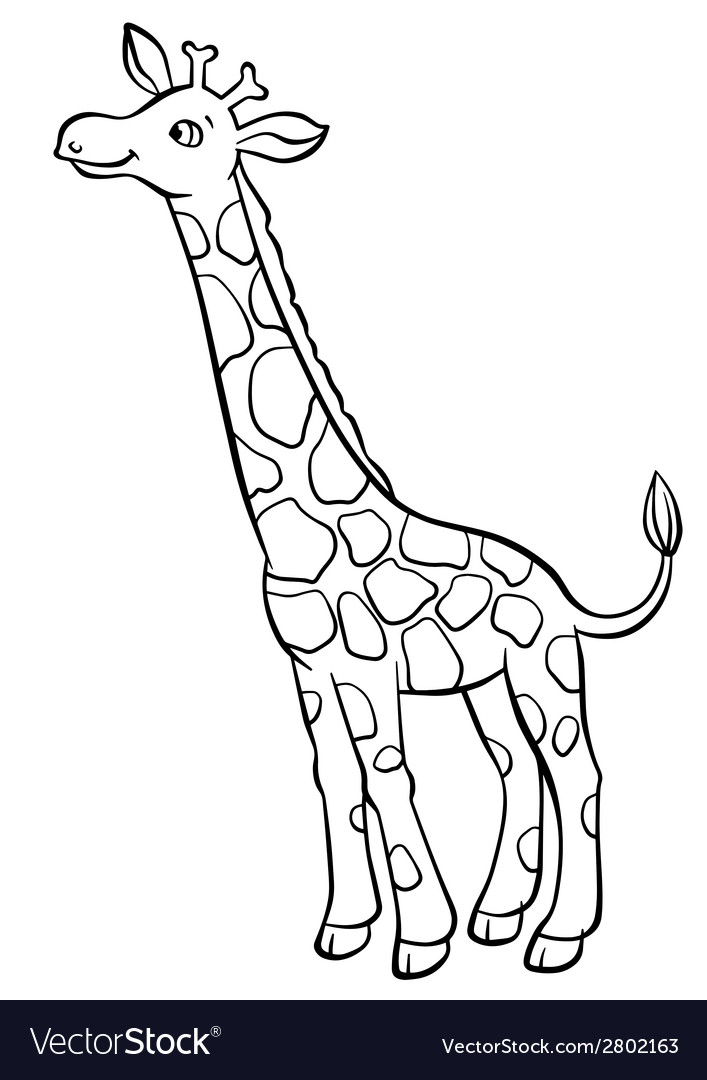Giraffe eating leaves from the tree vector | Price: 1 Credit (USD $1)
