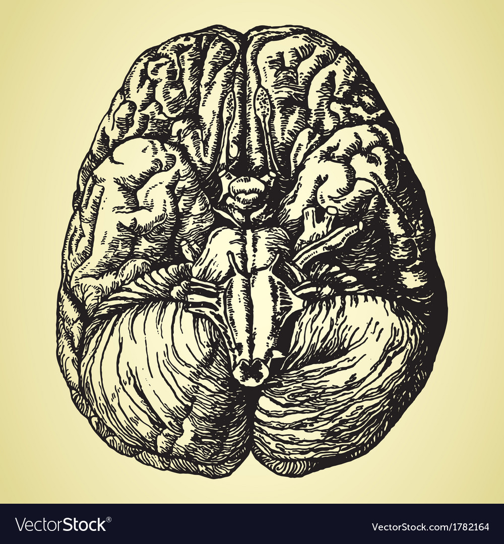 Old time hand drawn brain vector | Price: 1 Credit (USD $1)