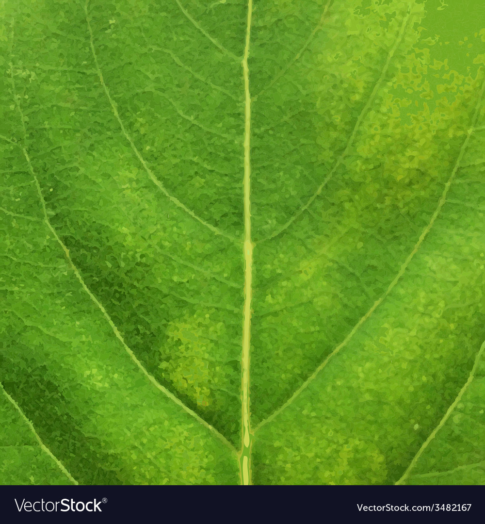 Green leaf texture vector   Price: 1 Credit (USD $1)