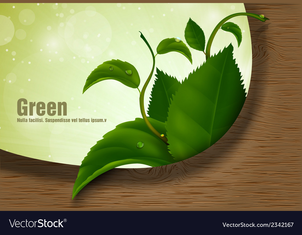 Green leaves of the wood vector | Price: 1 Credit (USD $1)