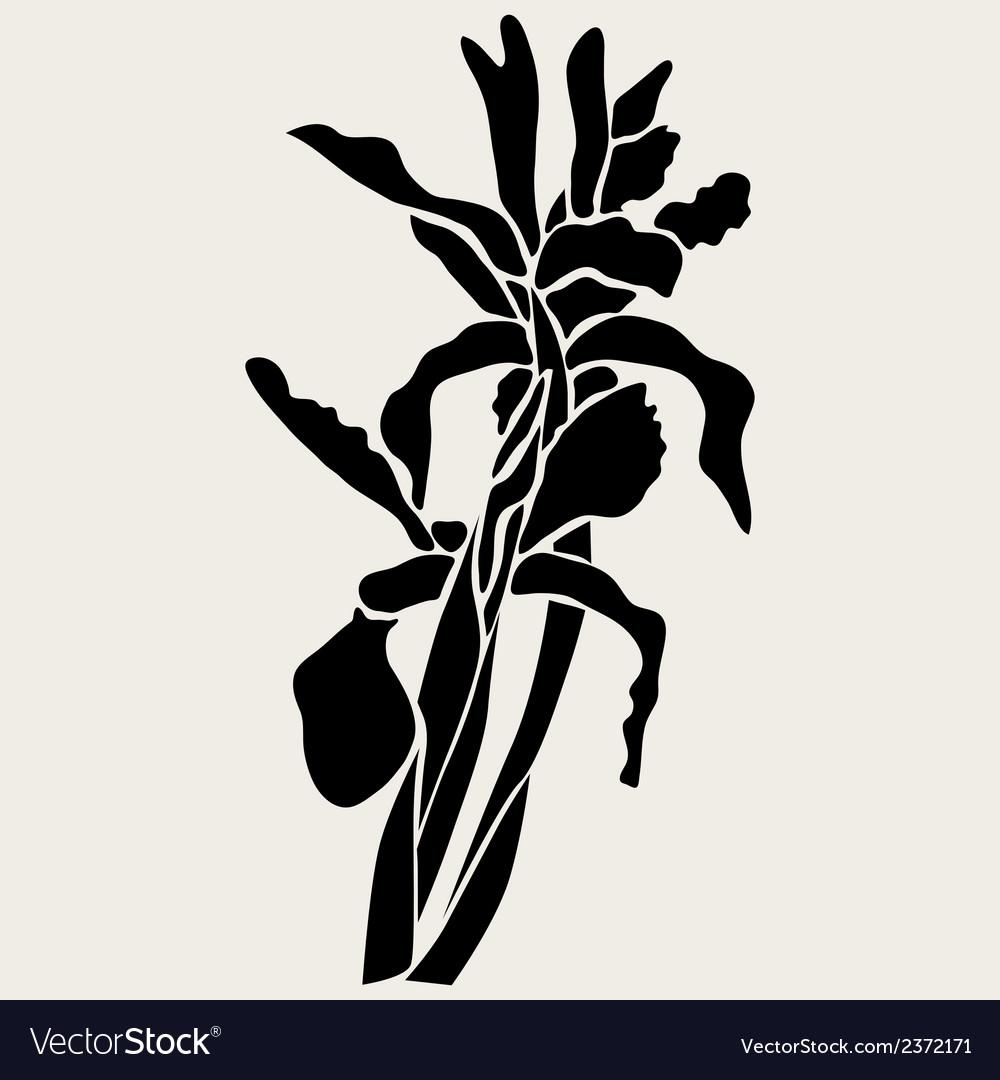 Decorative iris flowers vector | Price: 1 Credit (USD $1)
