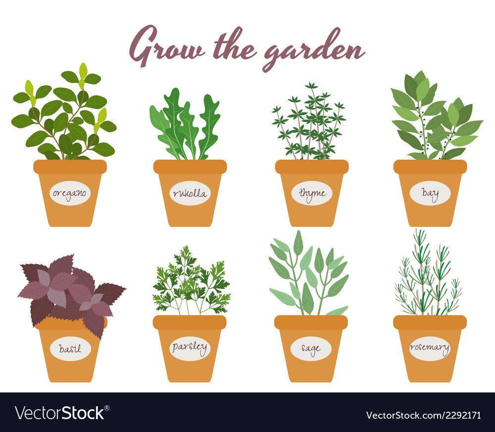 Set of herbs in pots with labels vector | Price: 1 Credit (USD $1)