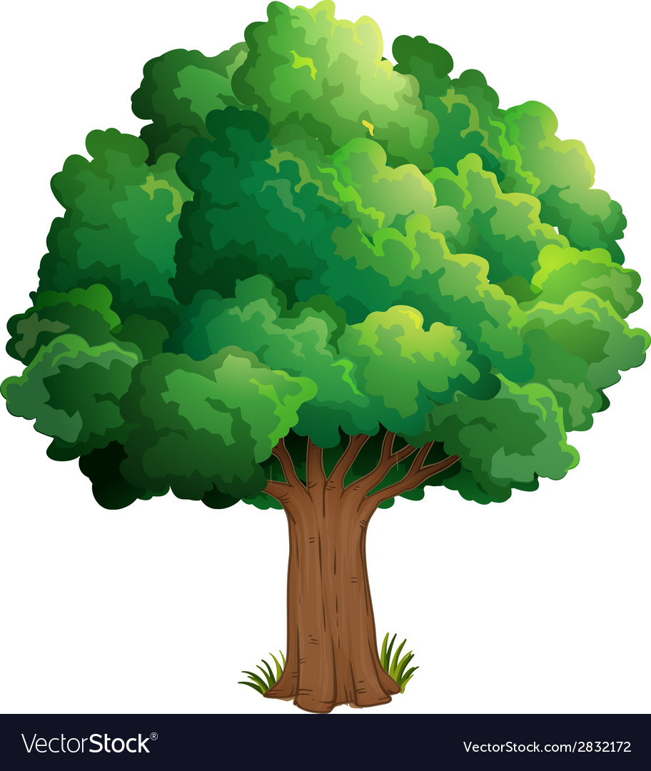 A tree at the forest vector | Price: 1 Credit (USD $1)