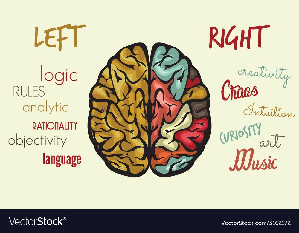 Brain dve hemisfere right left2 resize vector | Price: 1 Credit (USD $1)