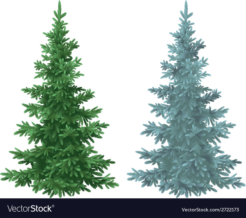 Christmas green and blue spruce fir trees vector | Price: 1 Credit (USD $1)