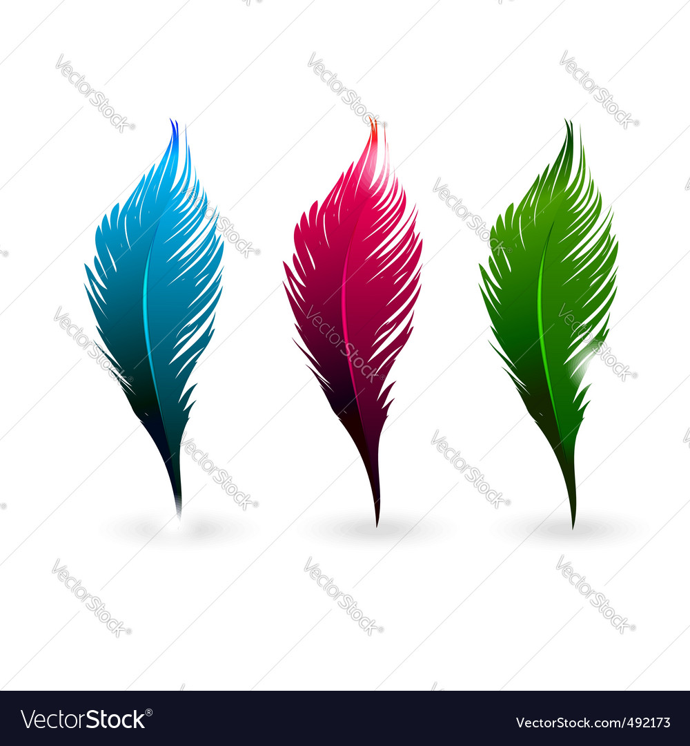 Color feathers vector | Price: 1 Credit (USD $1)
