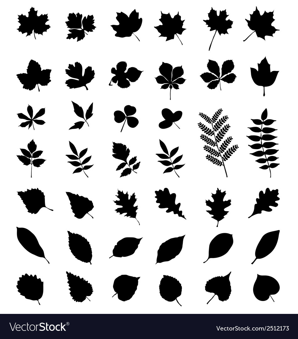 Foliage vector | Price: 1 Credit (USD $1)
