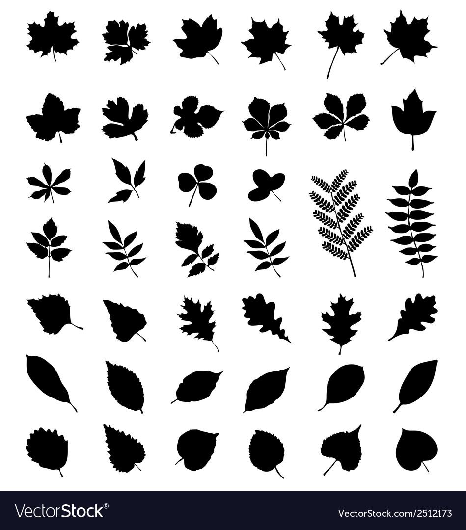 Foliage vector | Price: 1 Credit (USD $1)