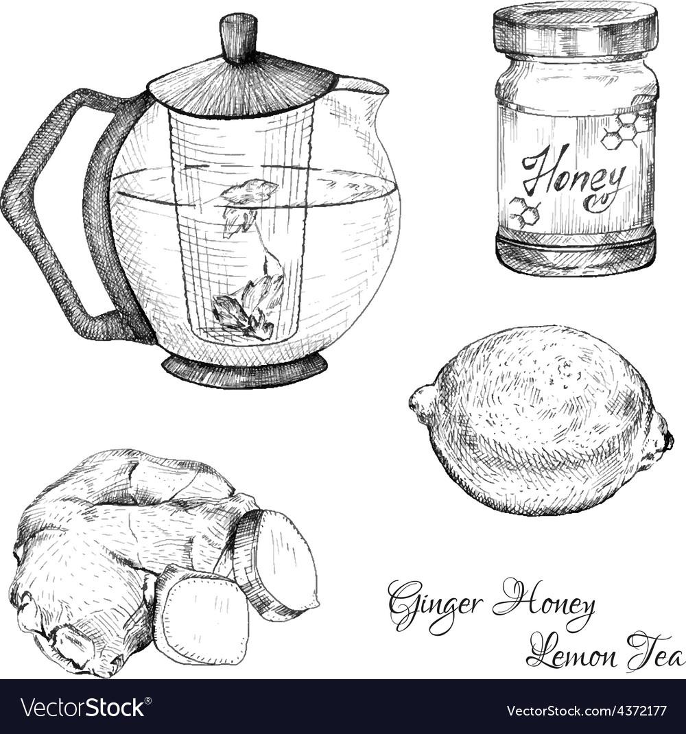 Ginger honey lemon tea ink sketches set vector | Price: 1 Credit (USD $1)