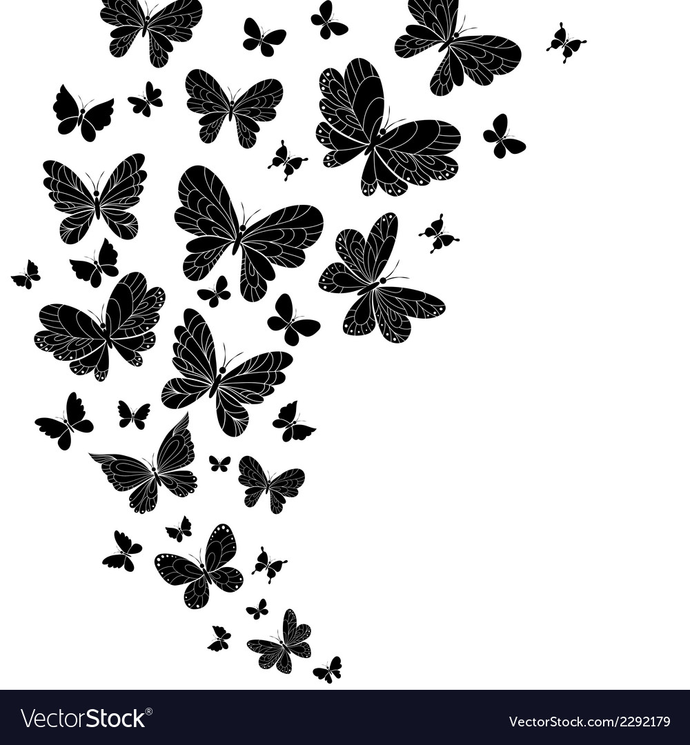 Flowing curving design of flying butterflies vector | Price: 1 Credit (USD $1)