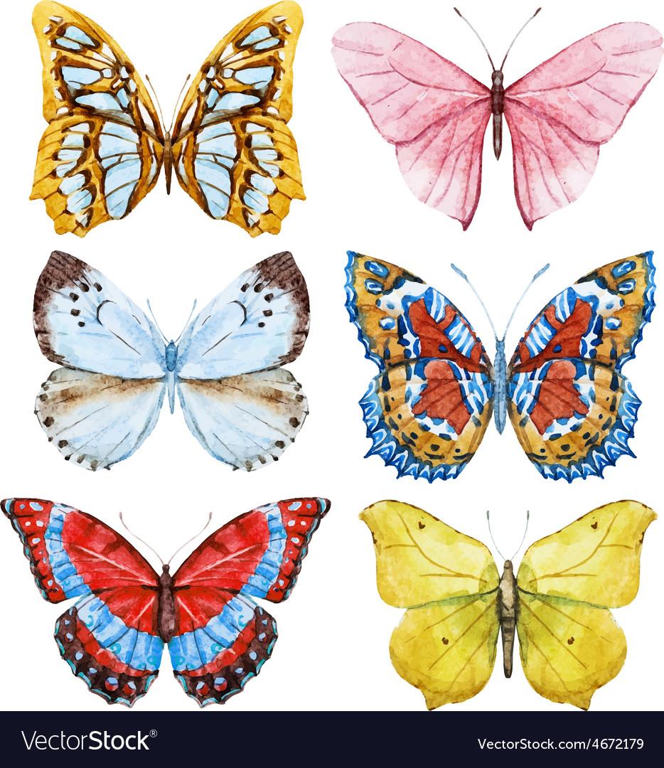 Watercolor butterflies vector | Price: 1 Credit (USD $1)