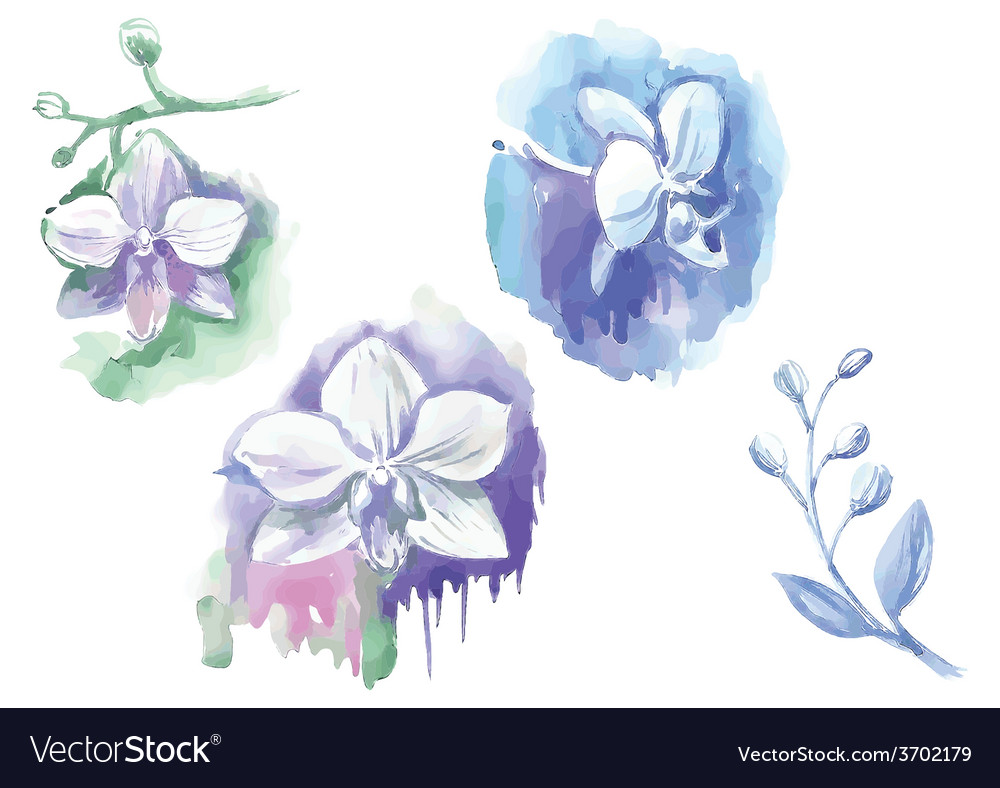 Watercolor flowers in different styles vector | Price: 1 Credit (USD $1)