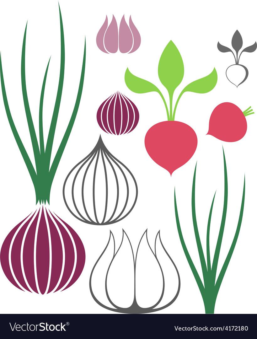 Vegetable garlic onion radish vector | Price: 1 Credit (USD $1)
