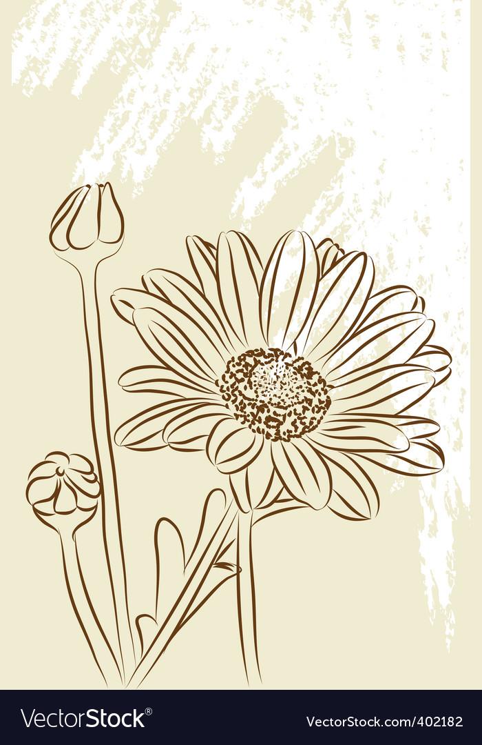 Beautiful chamomiles vector   Price: 1 Credit (USD $1)
