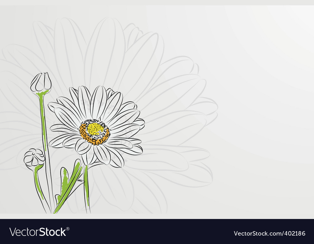 Beautiful chamomiles vector | Price: 1 Credit (USD $1)
