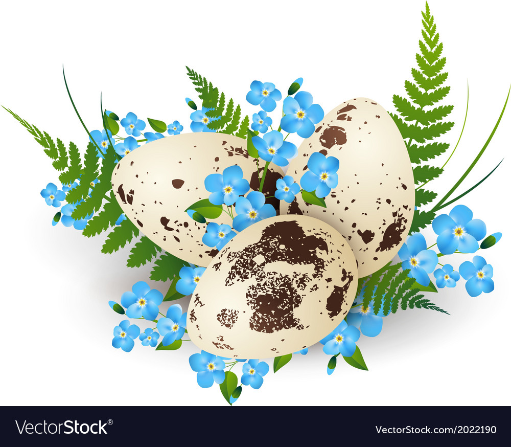 Easter quail eggs vector | Price: 1 Credit (USD $1)