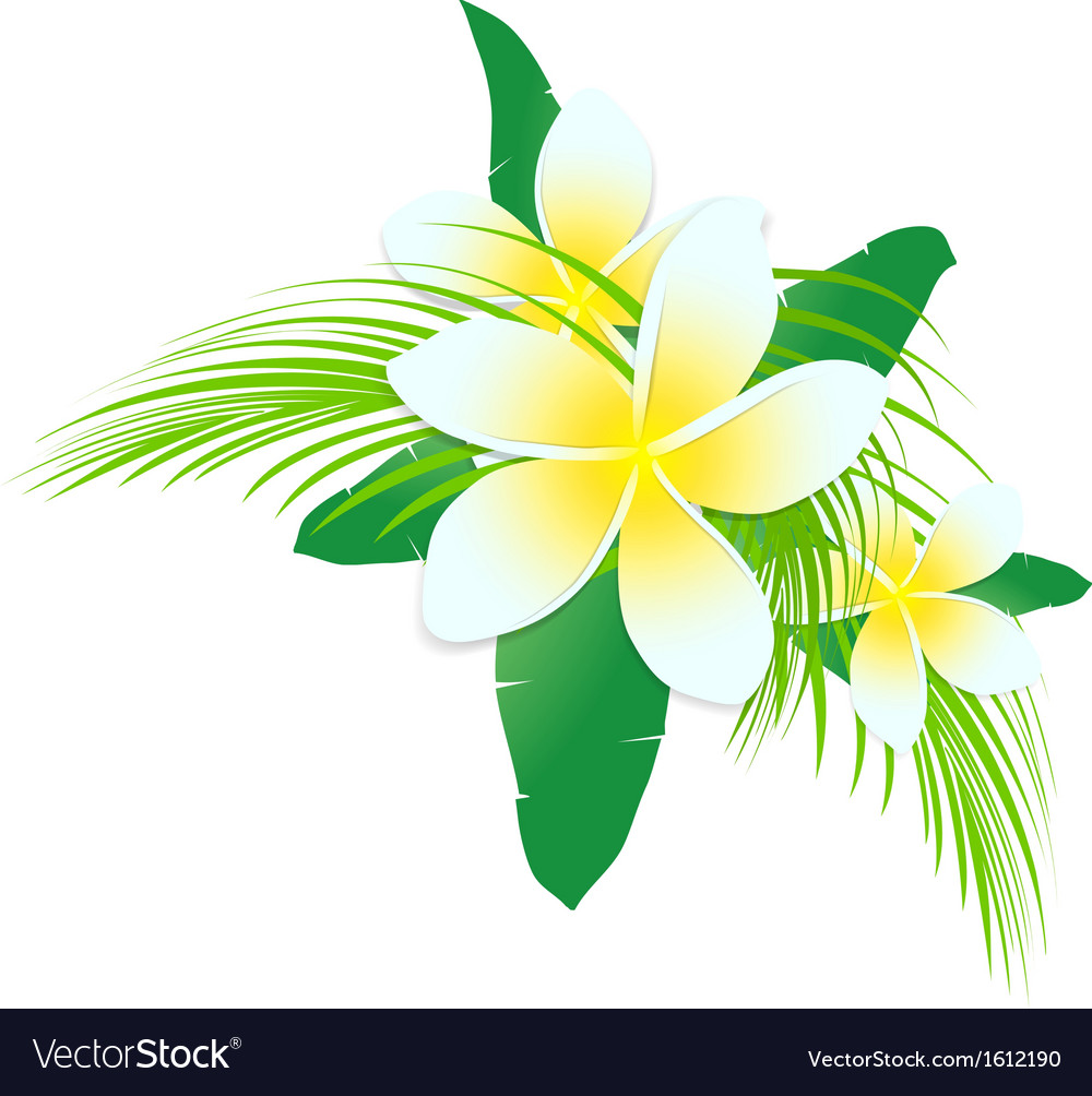 Frangipani tropic flowers vector | Price: 1 Credit (USD $1)