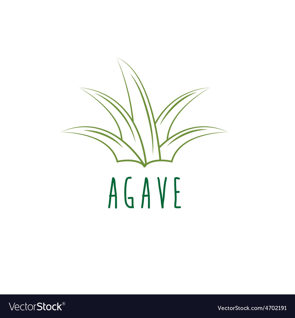 Agave design template vector | Price: 1 Credit (USD $1)