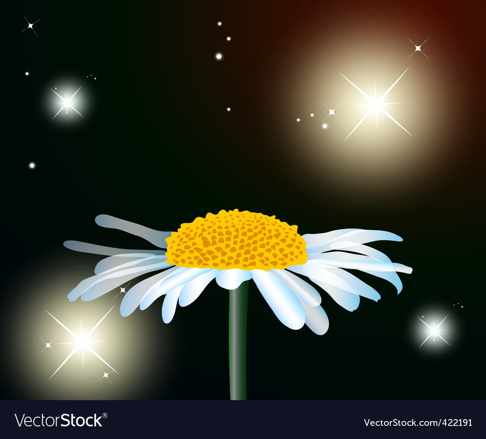 Flower chamomile vector | Price: 1 Credit (USD $1)