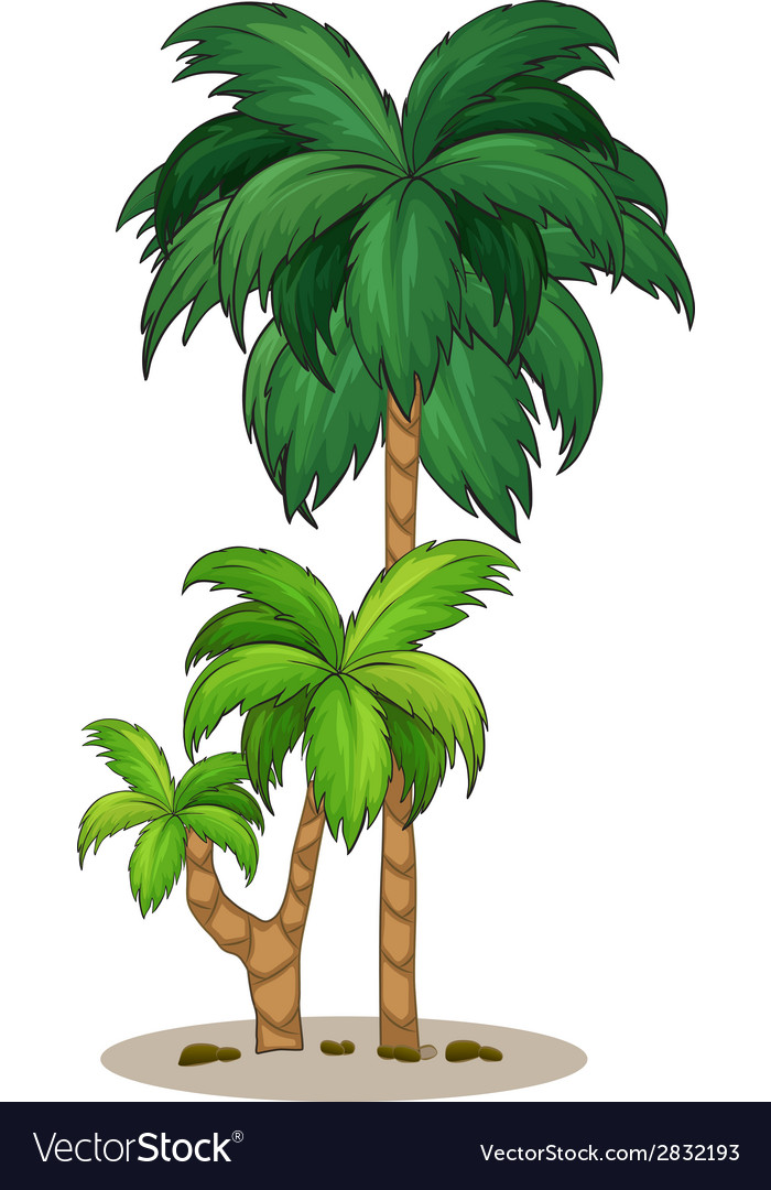 A palm tree vector | Price: 1 Credit (USD $1)