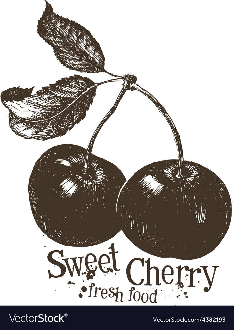 Cherry logo design template fruit or fresh vector | Price: 3 Credit (USD $3)
