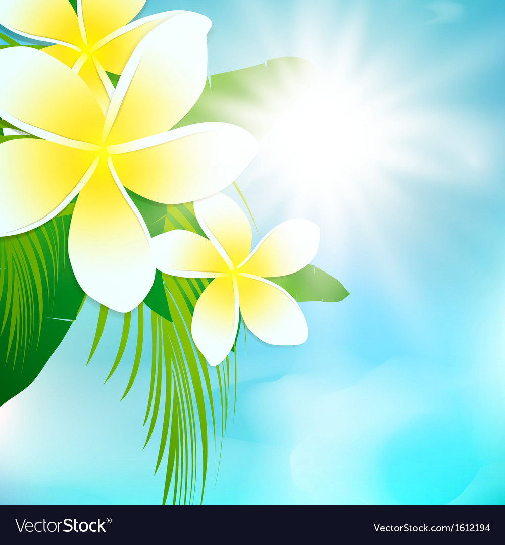 Palm leaves and frangipani flowers vector | Price: 1 Credit (USD $1)