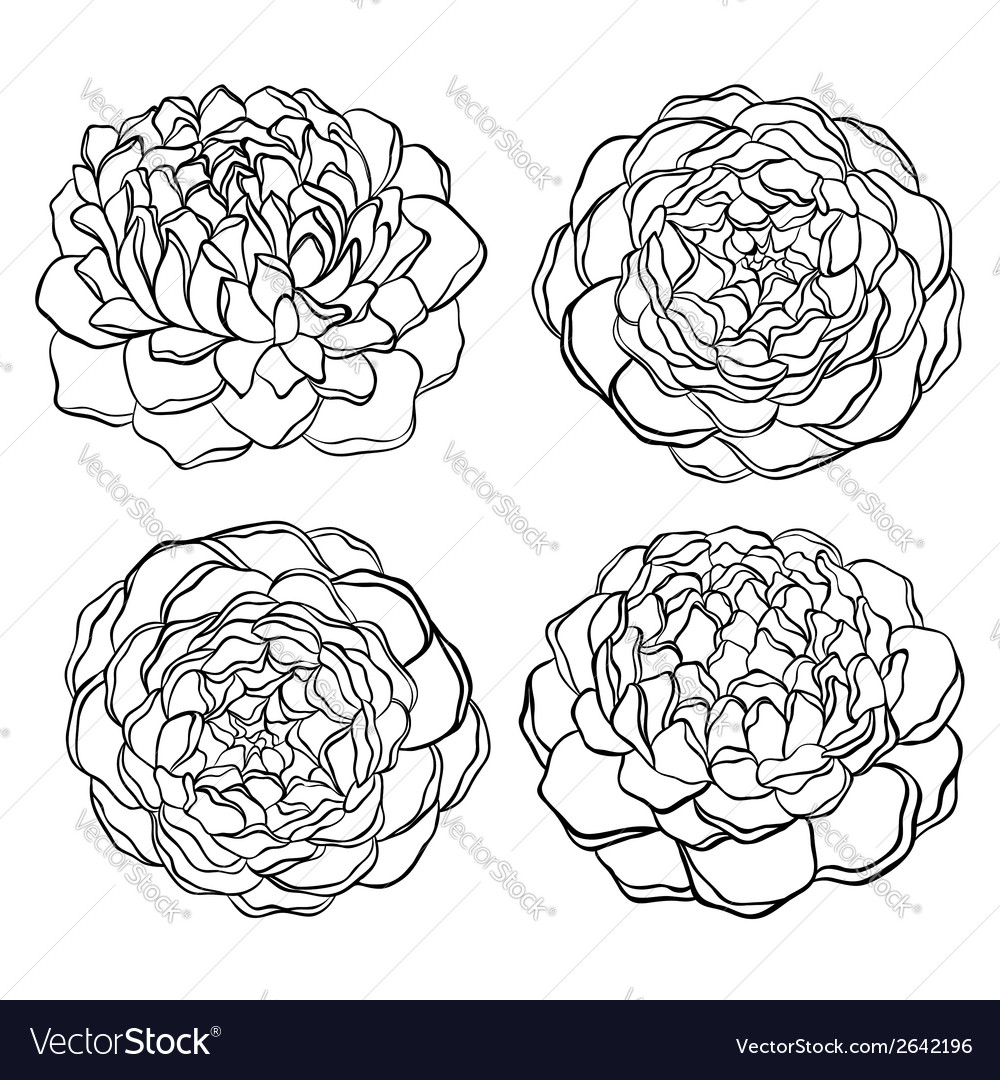 Set of black and white flower isolated vector | Price: 1 Credit (USD $1)