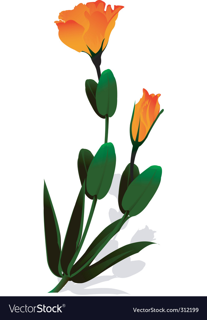 Flower and leaves vector   Price: 1 Credit (USD $1)