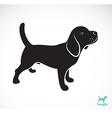 Dog beagle vector