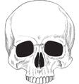Human skull isolated vector