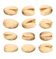 Pistachio fruit set vector