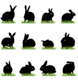 Rabbits3 vector