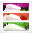 Berries banners set vector