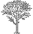 Tree made of electronic paths vector