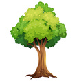 A giant tree vector