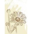 Beautiful chamomiles vector