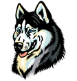 Siberian husky head vector