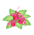 A group of fresh red hibiscus flowers vector