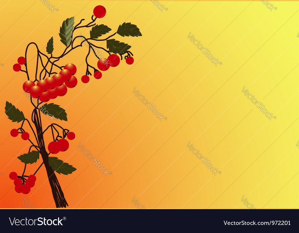 Red rowan 2 vector | Price: 1 Credit (USD $1)