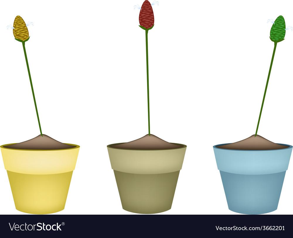 Zingiber zerumbet plants in ceramic flower pots vector | Price: 1 Credit (USD $1)