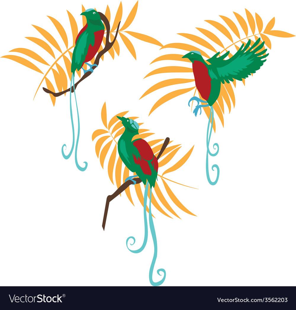 Bird of paradise set vector | Price: 1 Credit (USD $1)