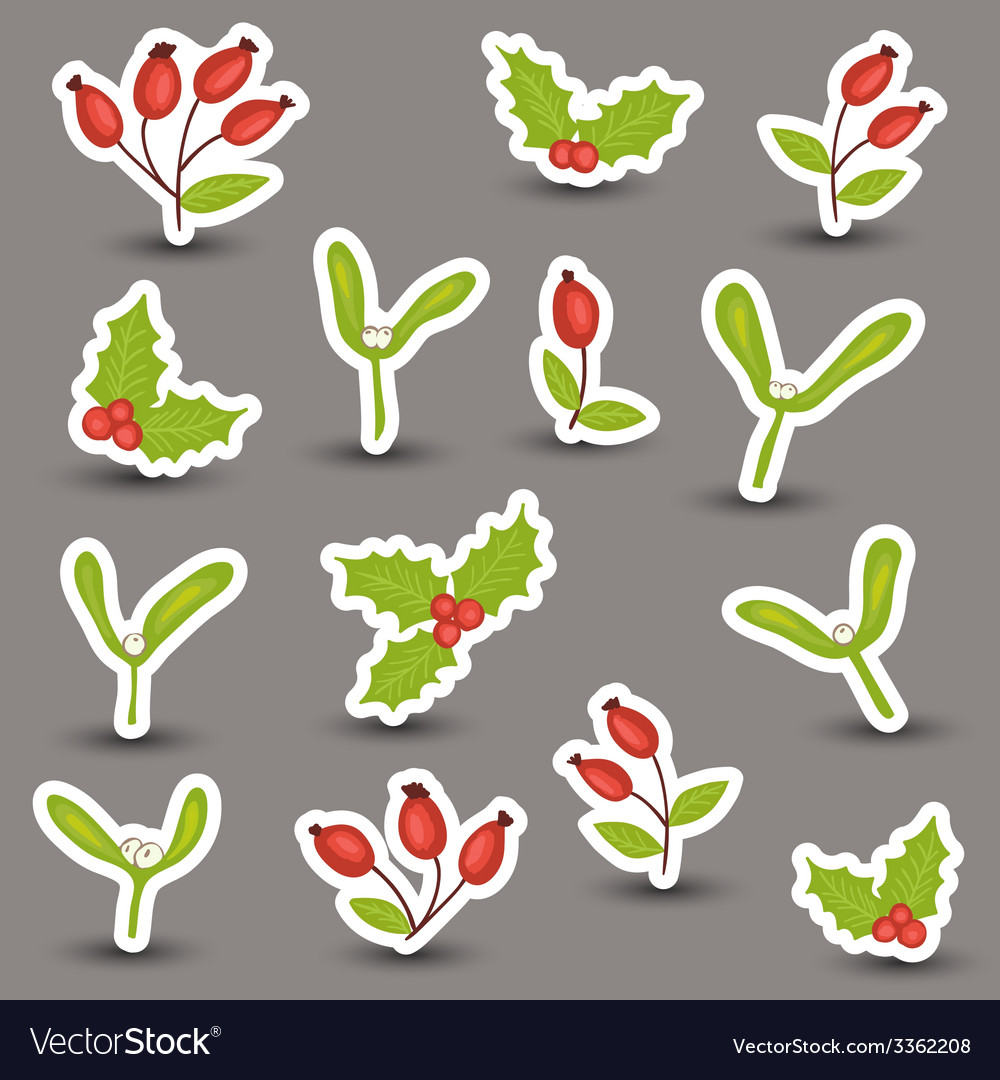 Christmas winter natural decoration vector | Price: 1 Credit (USD $1)