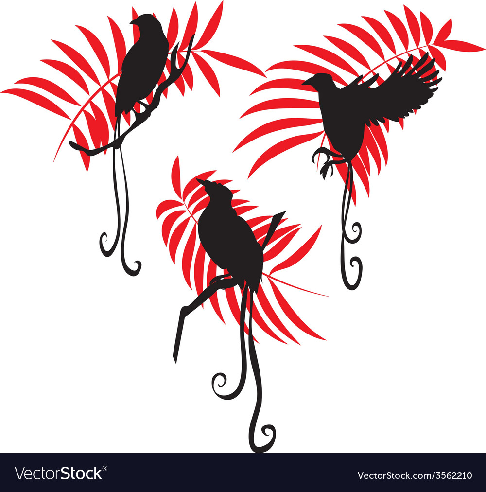 Bird of paradise silhouette set vector | Price: 1 Credit (USD $1)