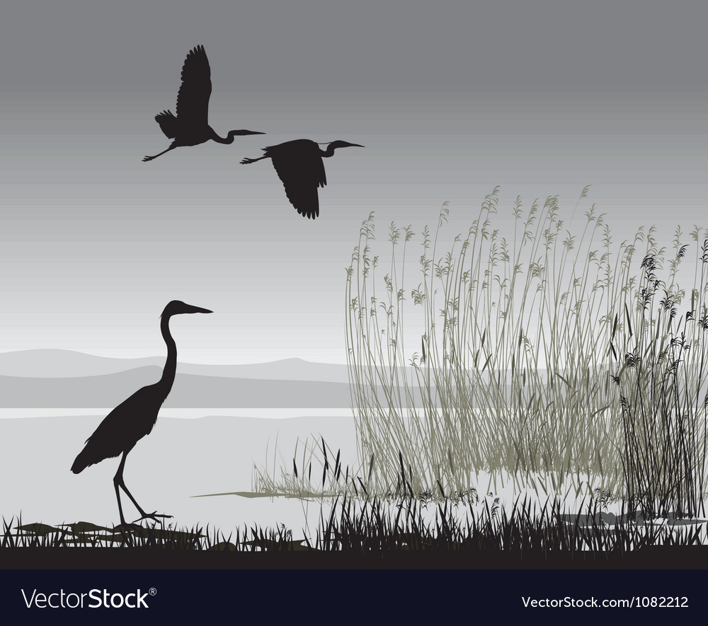 Herons vector | Price: 1 Credit (USD $1)