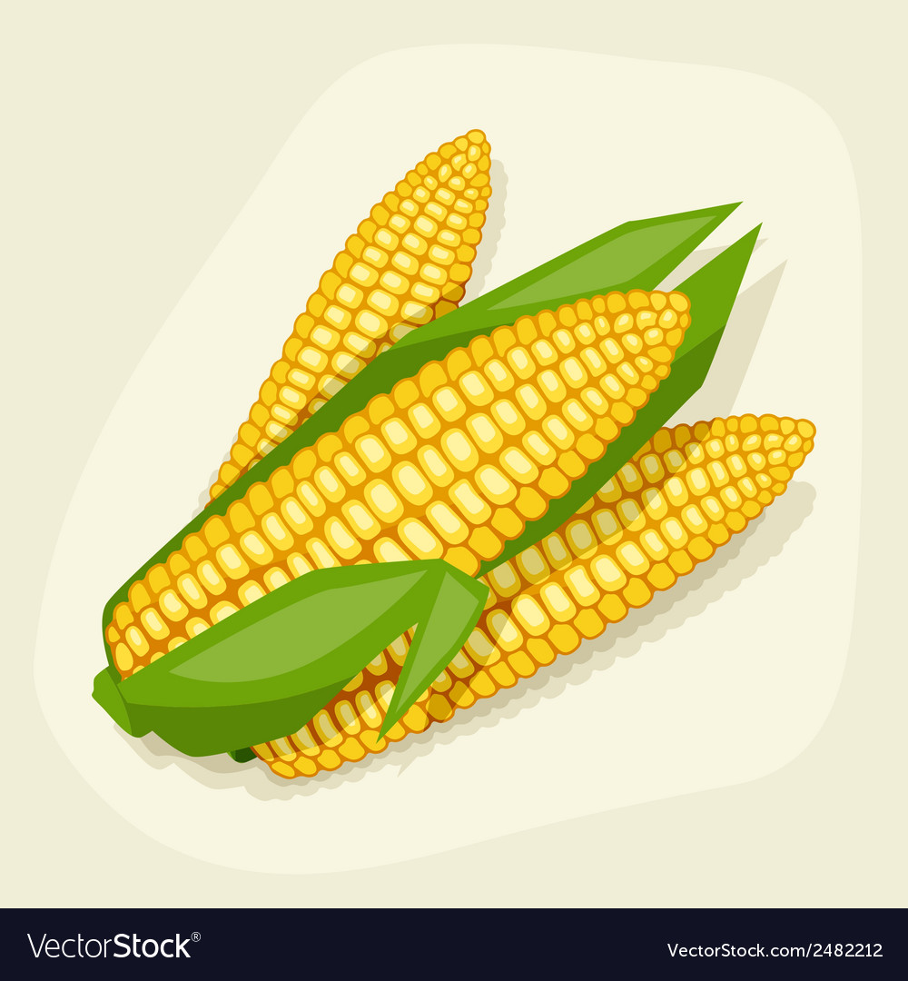 Stylized of fresh ripe corn cobs vector | Price: 1 Credit (USD $1)