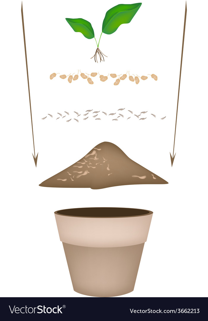 Terracotta flower pots with soil and young plant vector | Price: 1 Credit (USD $1)